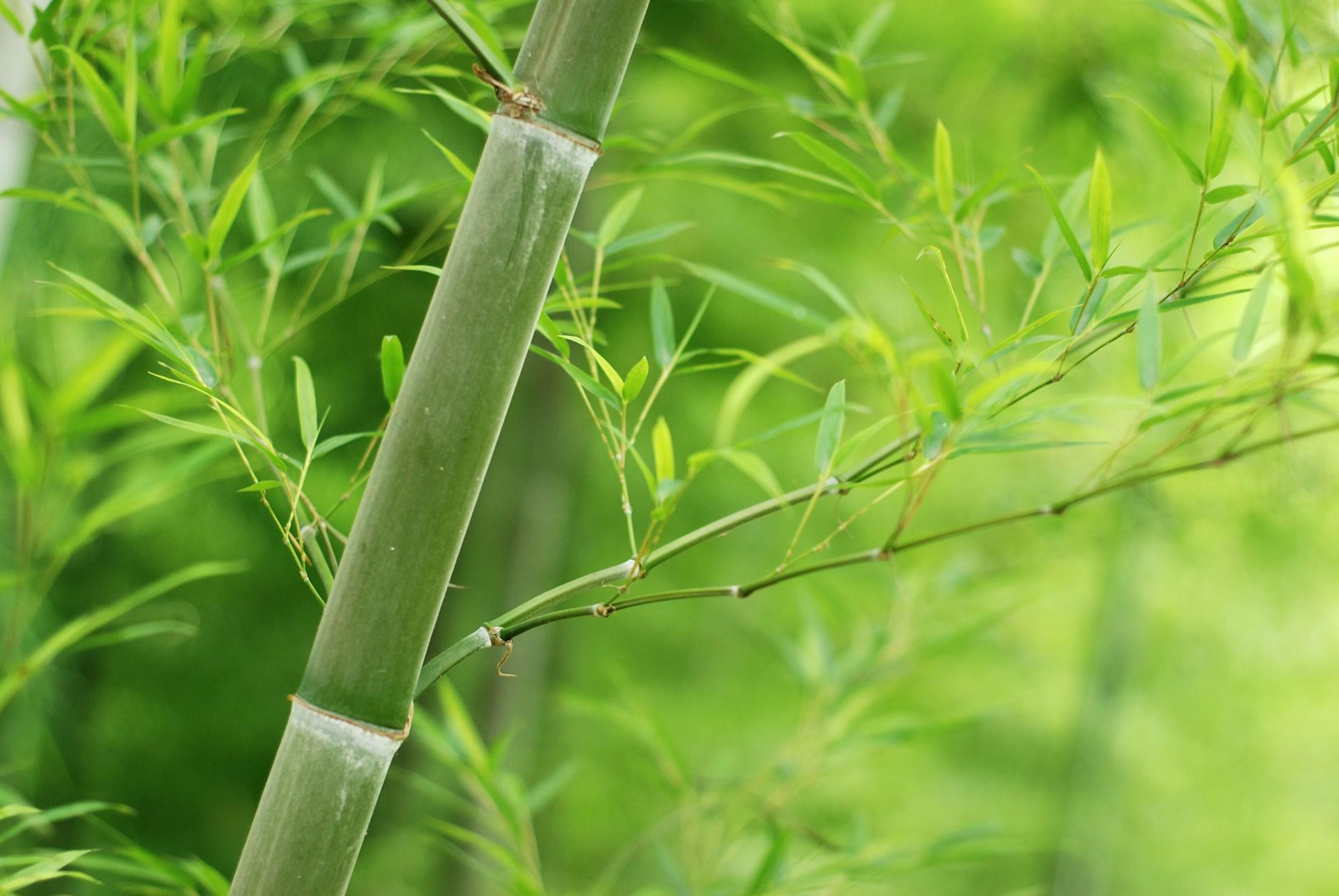 Čo je bambusové vlákno?
